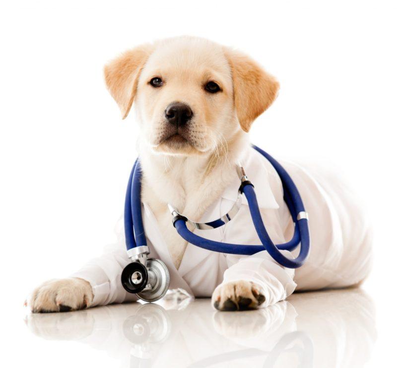 Критерии гипоаллергенной породы собак