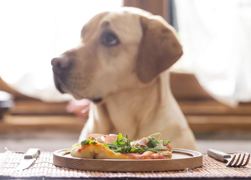 собака сидит перед тарелкой