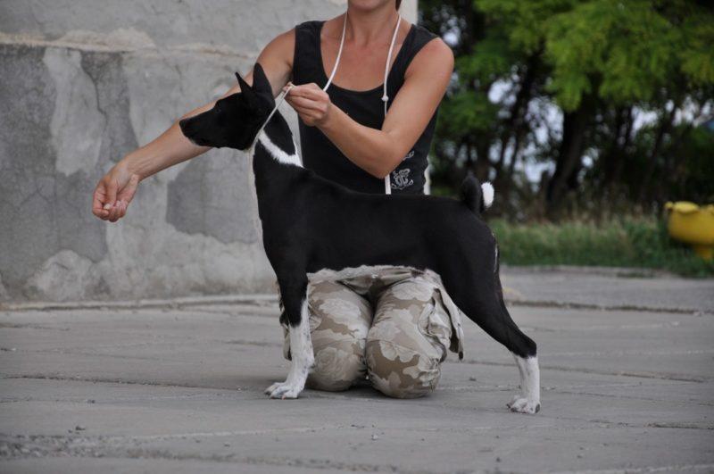 Положение собаки при измерении роста