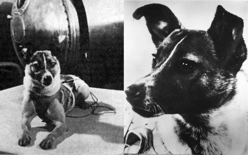 Лайка - первая собака-космонавт