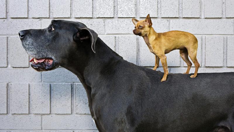 Рост собаки зависит от породы