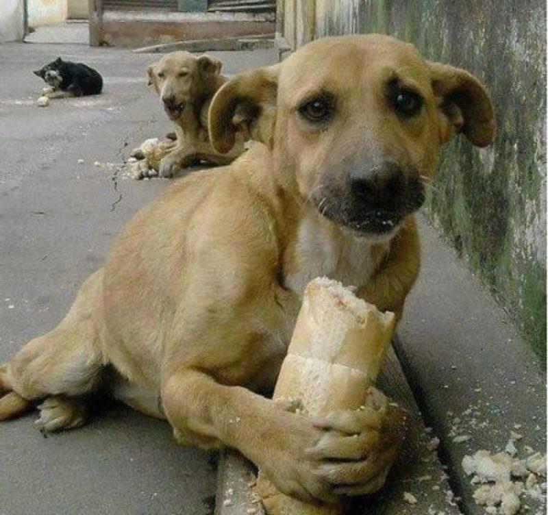 у собаки запор