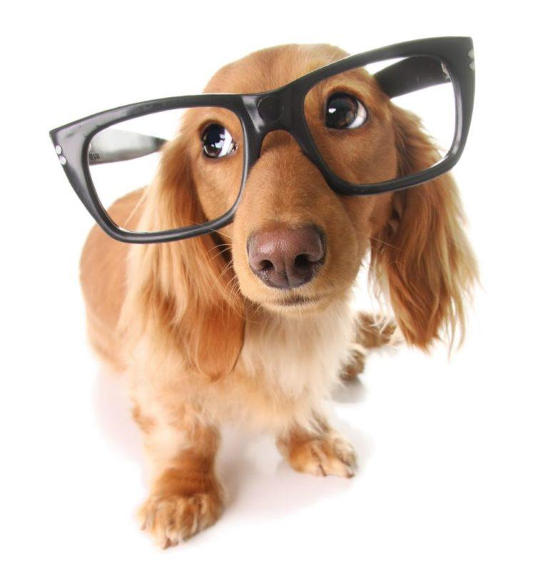 Собака с большими очками