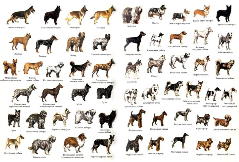 фото породы собак