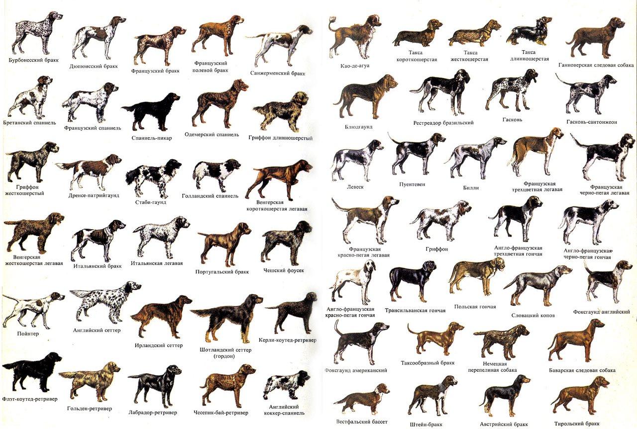 полный список пород собак