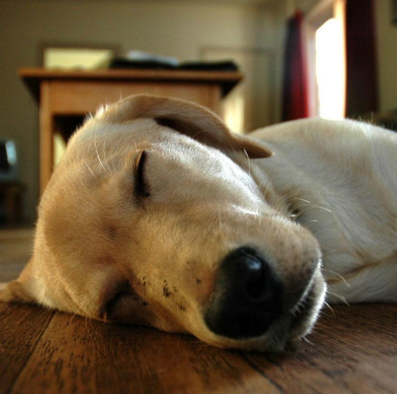 Демодекоз у собак