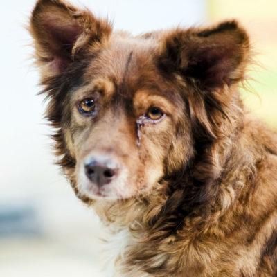 Энтерит у собак, можно ли избежать?