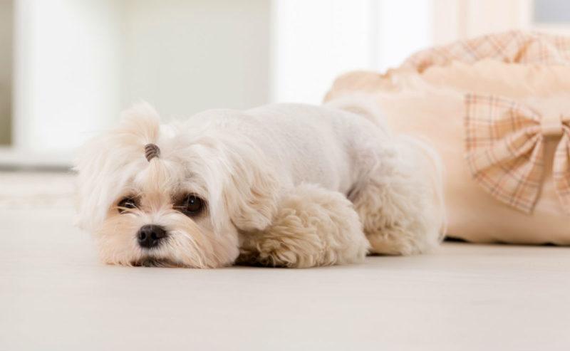 Заболевания у собак