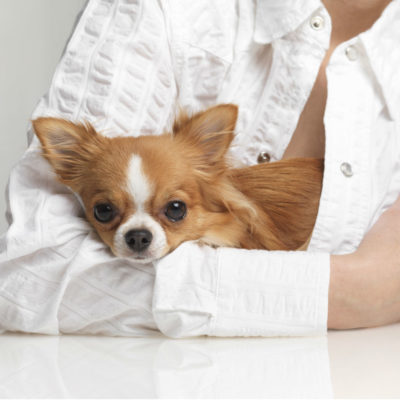 Как выбрать гипоаллергенную собаку