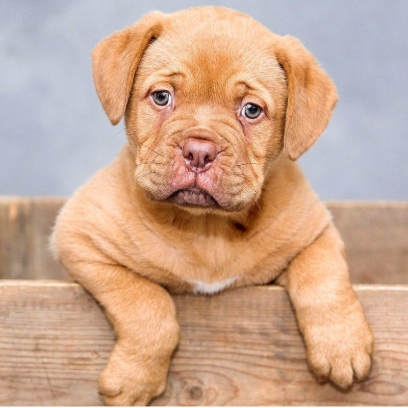 Правила и полезные советы, как можно щенка приучить к туалету