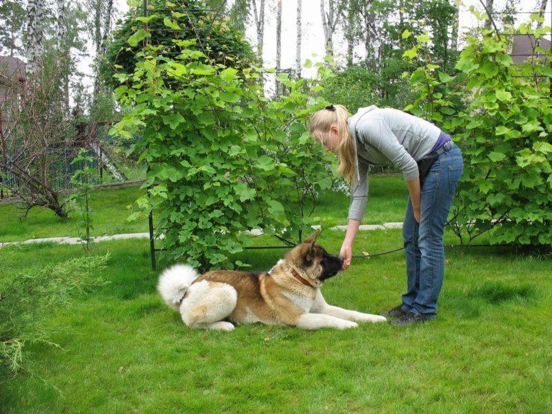Как правильно предложить лакомство собаке