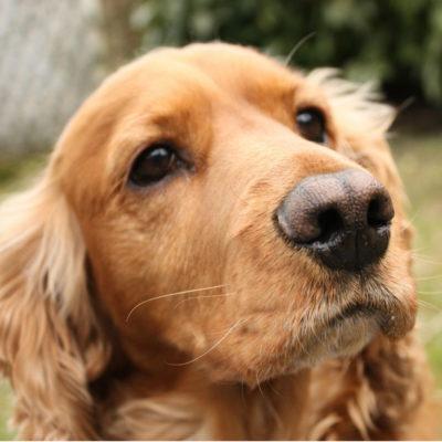 Лишай у собак, стоит ли опасаться владельцу?