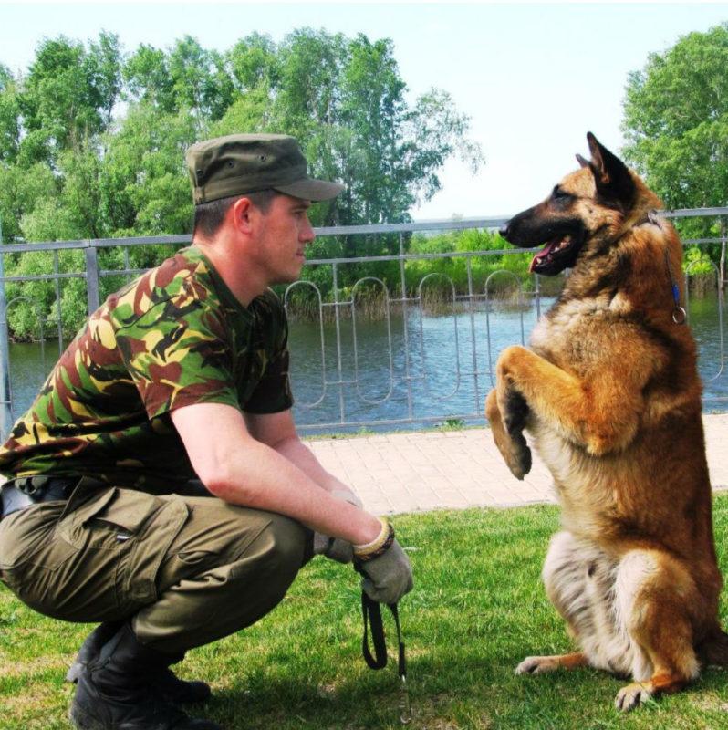Как научить свою собаку специальным командам