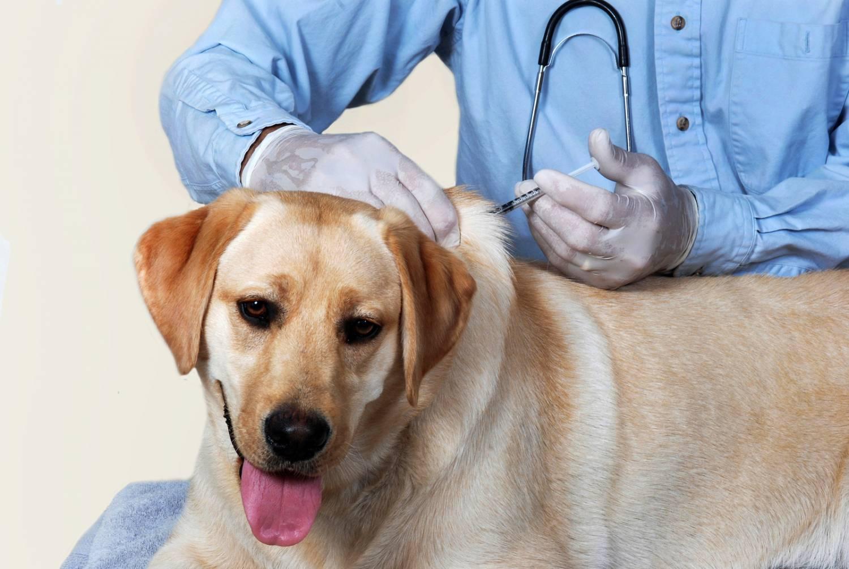 Наглядный график прививок для щенков