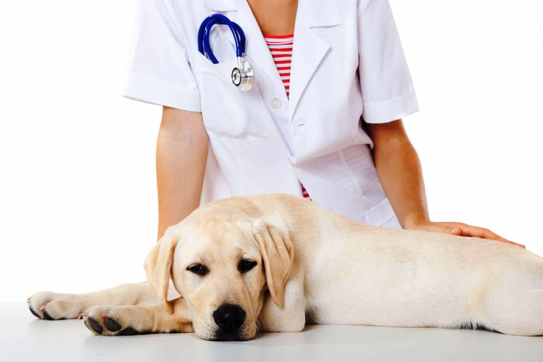 Вся правда о стерилизации собак
