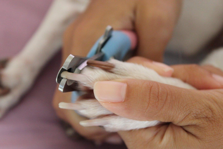 Стрижка когтей у собак в домашних условиях