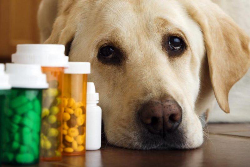 Собака и лекарства
