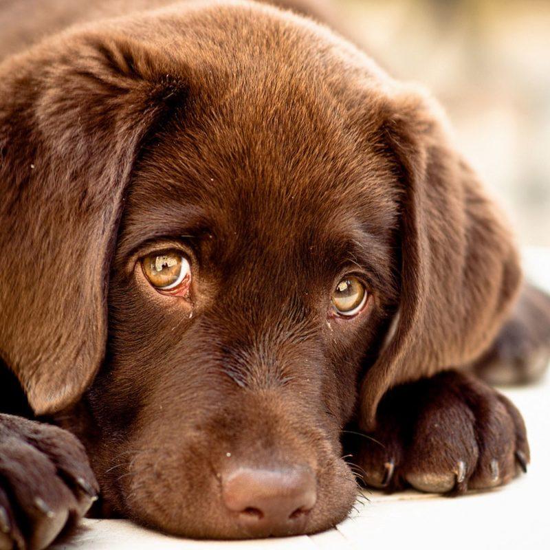 Подкожный клещ у собак: лечение демодекоза, саркоптоза и др
