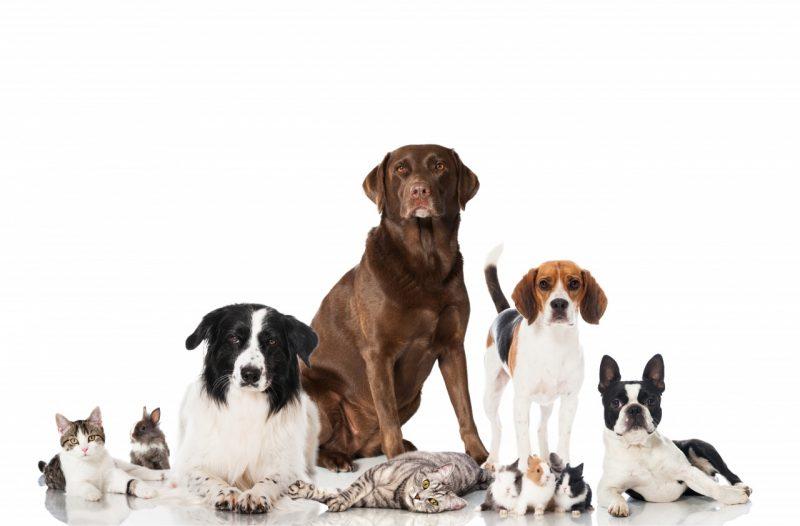 бордер-колли и другие животные
