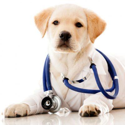 щенок врач