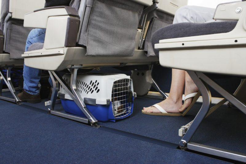 перелет собаки в салоне самолета