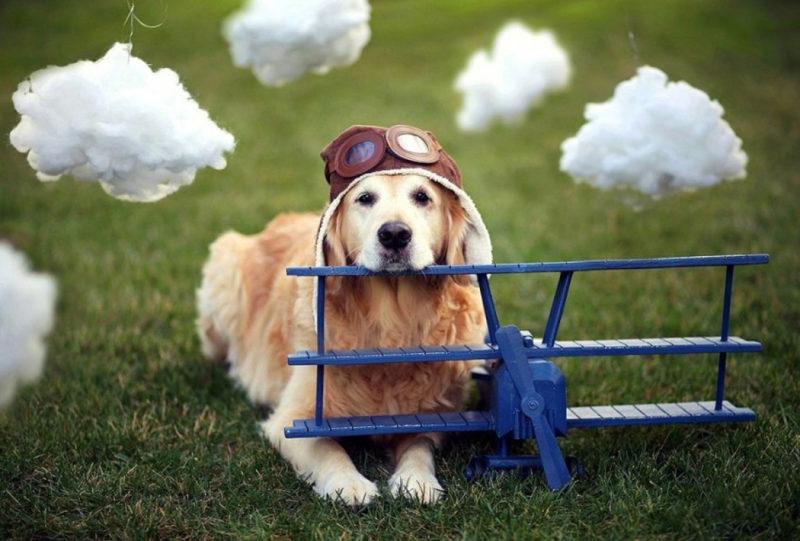 собака и самолёт