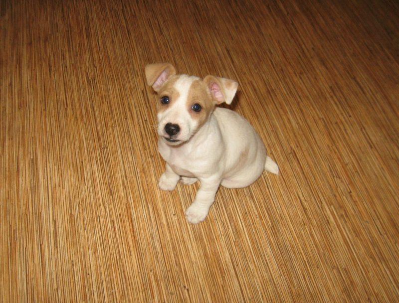 щенок сидит на полу