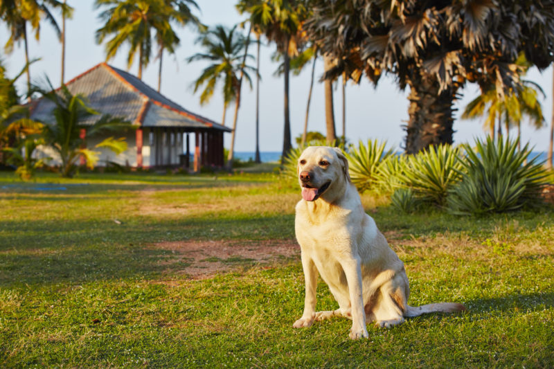 собака-охранник дома