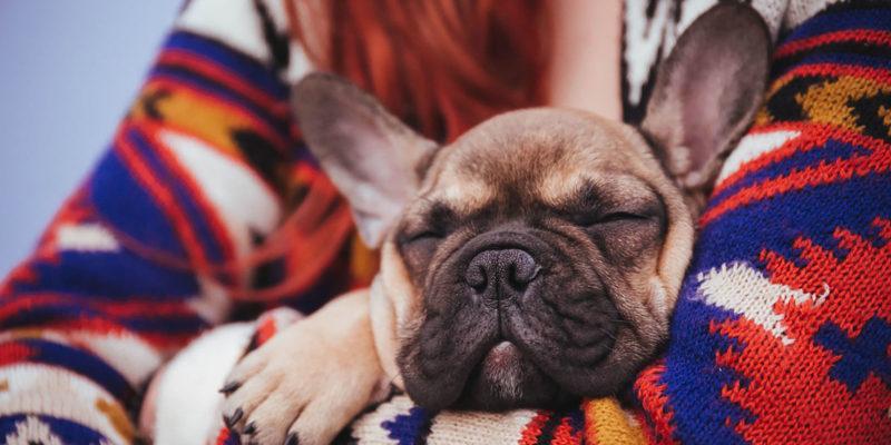 почему появляется аллергия у собаки