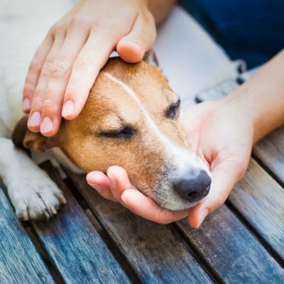 Грибок у собак: на лапах, в ушах, на коже и на морде