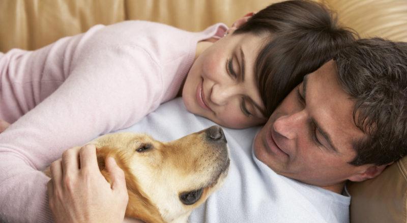 профилактика аллергии у собаки